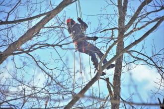 Tree lopping tenant responsibility